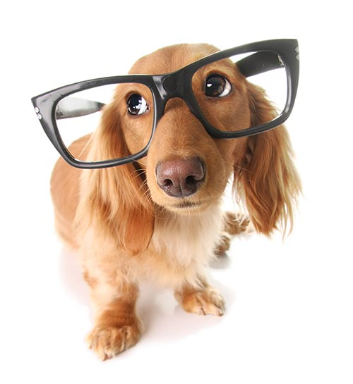 dog wearing glasses